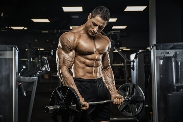 Arm Workouts for Beginners Workout Guide 2019